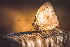 Enchanting big butterfly Stock Images
