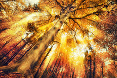 Enchanting forest scenery in autumn. With intense moody light falling through the foliage royalty free stock image