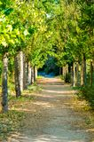 Enchanting path through the forest, road near Aranjuez, Spain. Vertical photo in summer royalty free stock photography