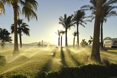 Enchanting picture: Jets of automatic irrigation of palm trees. In the rays of the rising sun royalty free stock images