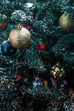 The enchanting smell of Christmas trees. New year, a time of miracles, gifts and toys. Christmas. xmas royalty free stock images