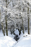 Enchanting snowy winter landscape Stock Photography