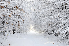 Enchanting snowy winter landscape Stock Images