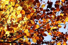 Fall leaves autumn color foliage trees france background royalty free stock photography