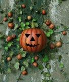 Enchufe de la calabaza de Halloween adornado en vides de calabaza imagenes de archivo