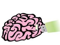 Enchufe el mecanismo impulsor del flash del USB en cerebro Imágenes de archivo libres de regalías