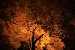 Enciéndase para arriba de hojas coloreadas Fotos de archivo