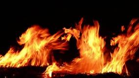 Encienda el burning en la chimenea, lazo - vídeo común metrajes