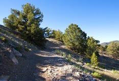 Encienda el camino en las montañas cerca de Salida, CO Imagenes de archivo