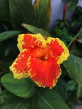 Encienda la flor Imágenes de archivo libres de regalías