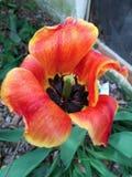 Encienda la flor Imagen de archivo