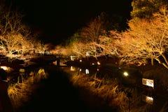 Encienda para arriba el árbol, iluminación del invierno en Mie, Japón Imagen de archivo libre de regalías