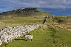 Encierre la colina de Y Gante, valles de Yorkshire, Reino Unido Imagen de archivo