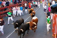 Encierro - Laufen der Stiere stockbild