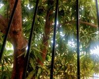 Encierro naturel image libre de droits