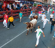 Encierro - Running of the Bulls Stock Photo