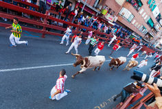 Encierro - Running of the Bulls Royalty Free Stock Photography