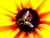 Encima de abeja cercana y de la flor brillante Fotografía de archivo