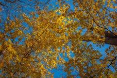 Encima de es todo el amarillo y azul Imagen de archivo libre de regalías
