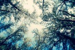 Encima de estilo fresco del vintage del filtro del bosque del pino de la visión Foto de archivo libre de regalías