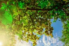Encima de la opinión sobre árbol y el cielo azul Imágenes de archivo libres de regalías