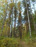 Encima de la opinión sobre árboles, trayectoria del estrecho del bosque del otoño entre ellos Foto de archivo libre de regalías