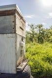 Encima de la vista cercana de la caja de la abeja Imágenes de archivo libres de regalías