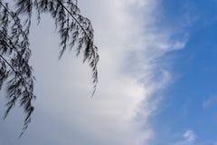 Encima de la vista de los árboles de pino fotos de archivo