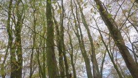 Encima de parecer tirado en el medio de otoño coloreó el bosque en Escocia metrajes