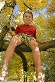 Encima de un árbol Fotografía de archivo