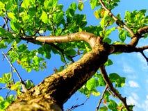 Encima en del árbol fotos de archivo libres de regalías