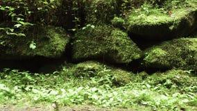 Encintados de piedra o rocosos viejos a lo largo del camino cubierto con el musgo, la hierba y el verdor en bosque del área escén metrajes