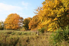 Enclosed autumn colors i Stock Image