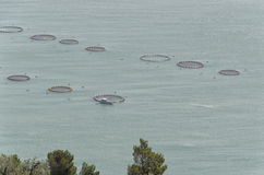 The enclosures of a fish farm Stock Photos