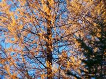 Encobrindo a árvore foto de stock royalty free