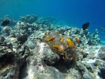 Encontrando Nemo fotos de stock