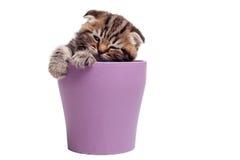 Encontrando um lugar calmo para dormir Imagens de Stock