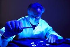 Encontrar das evidências na camisa do criminoso sob a luz UV pelo técnico fotos de stock royalty free