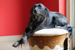 Encontre Donna, um híbrido, cão disperso encontrado em um prado na ilha grega de Lesbos Foto de Stock Royalty Free