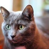 Encontre meu gato Maddie Fotografia de Stock Royalty Free
