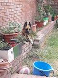 Encontre o cão Imagens de Stock Royalty Free