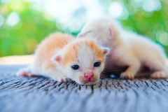 Encontro adorável do gatinho dois Imagens de Stock Royalty Free