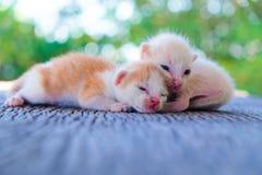 Encontro adorável do gatinho dois Fotos de Stock