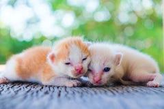 Encontro adorável do gatinho dois Foto de Stock
