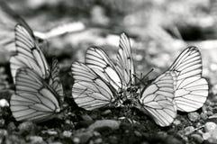 Encontro das borboletas imagens de stock