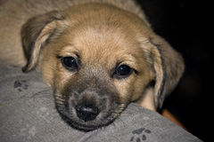 Encontro do cão Imagem de Stock Royalty Free