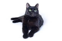 Encontro do gato preto isolado no fundo branco Foto de Stock