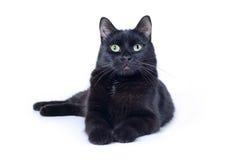 Encontro do gato preto isolado no fundo branco Imagens de Stock
