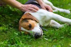 Encontro em um cão fresco da grama verde Imagens de Stock Royalty Free