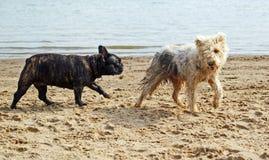 Encontro na praia Fotografia de Stock Royalty Free